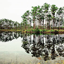 Everglades Reflections by Felipe Correa