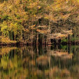 Everglades reflections by Sarah-jane Laubscher