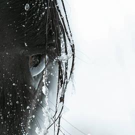 Eye Of The Storm by Kent Keller