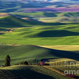 Fields of Green by Mike Dawson
