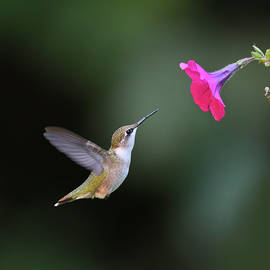 Flying To Flower by Wei Tang