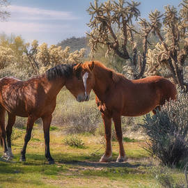 For The Love Of The Wild  by Saija Lehtonen