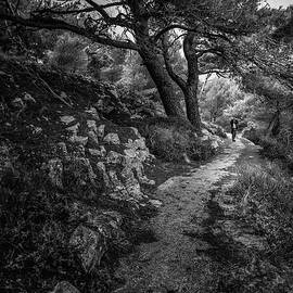 Forest Path, Lonely Woman and Crooked Tree by Silvijo Selman