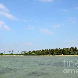 Forested tropical beach with coral and blue sky Jaffna Peninsula Sri Lanka by Imran Ahmed