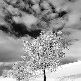Fresh Snow by Angelika Vogel