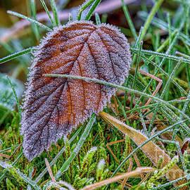 Frost by Veikko Suikkanen