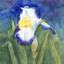 Glowing Evening Iris Watercolor by Conni Schaftenaar