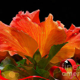 Glowing Hibiscus.  by Trudee Hunter