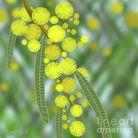 Golden Wattle Announcing the Start of Spring  by Stella SzeTu