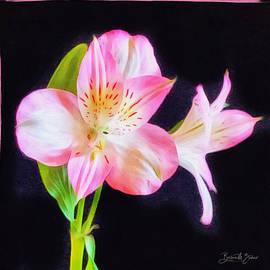 Gracefulness  by Barbara Zahno