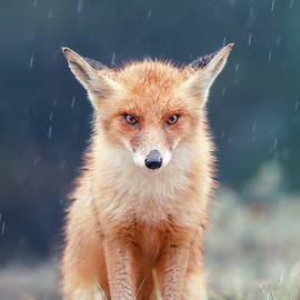 Grumpy Fox is Grumpy by Roeselien Raimond