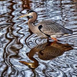 Heron and his doppelganger by Paul Ross