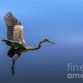 Heron by James Larkin