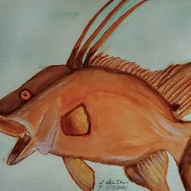Hogfish by Terry Feather