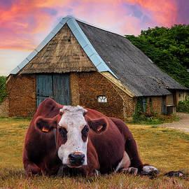 How Now Brown Cow by Debra and Dave Vanderlaan
