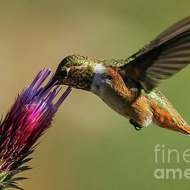 Hummingbird by Webb Canepa