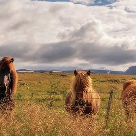 Icelandic Horses by Yves Gagnon