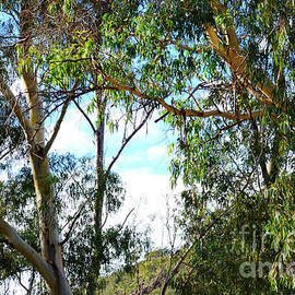 Iconic Australian bushland scene with tall eucalyptus trees and shrubs. by Milleflore Images