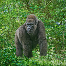 In the Jungle by Judy Kay