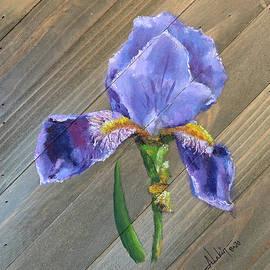 Iris by Alan Lakin
