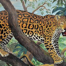 Jaguar In The Jungle by Nicola Fusco