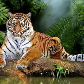 Jungle Tiger by Glenn Holbrook