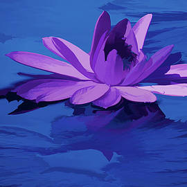 Lavender Blue Water Lily by Rosalie Scanlon