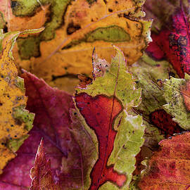 Leaf Pile by Connie Allen