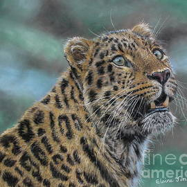 Leopard by Elaine Jones