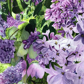 Lilacs by Bonnie Young