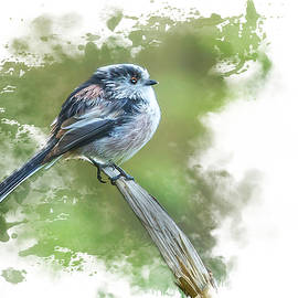 Long Tailed Tit by Darren Wilkes