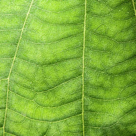 Macro photo of a leaf by Rob Downer