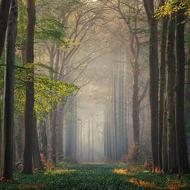 Magical forest by Martin Podt