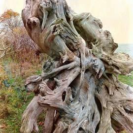 Nature's Sculpture by Marcia Lee Jones