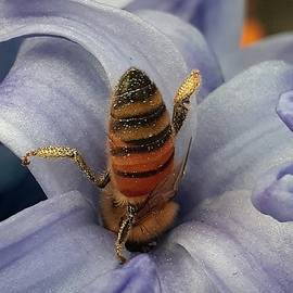 Hyacinth Love  by Belinda Lee