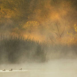 Out of the Mist by Sue Cullumber