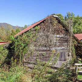 Overgrown Barn by Lorraine Baum