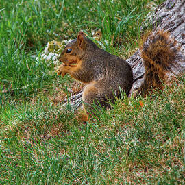 Peanut Time by Robert Bales