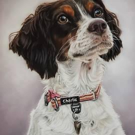Pet Portrait by Audrey Altemose