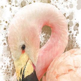Pink Flamingo  by Darren Wilkes