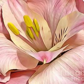 Pink Lily by Judy Palkimas