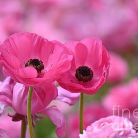 Pink Mist by Johanne Peale
