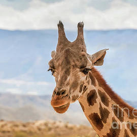 Portrait of giraffe watching on you by Beautiful Things