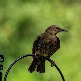 Pretty Bird by Cathy Kovarik