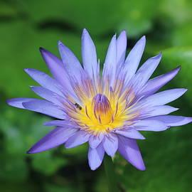 Purple by Nieves Egelkraut