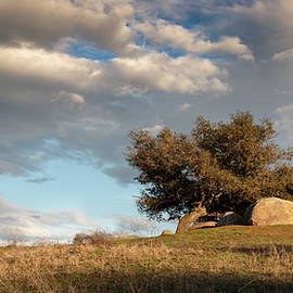 Ramona Grasslands Tree and Clouds by William Dunigan