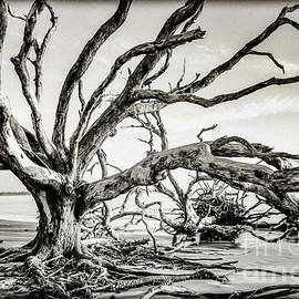 Reaching Out by Phil Cappiali Jr