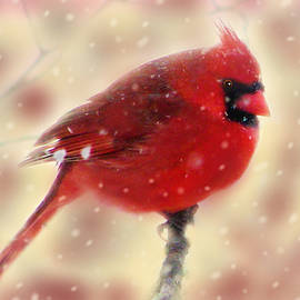 Red in the Morning  by Angela Davies