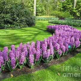 River of Purple - Keukenhof Gardens by Kathryn Jones