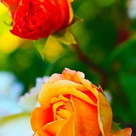 Rose Love by Loretta S